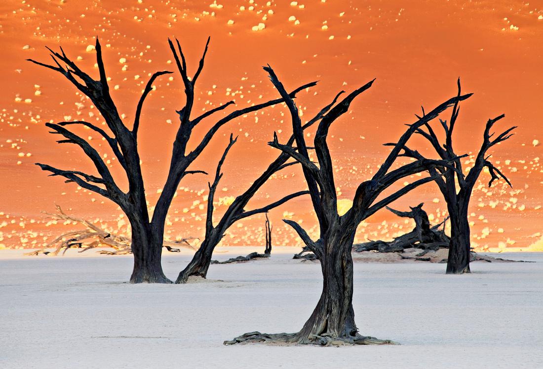 Kokerboom - Namaqualand - South Africa