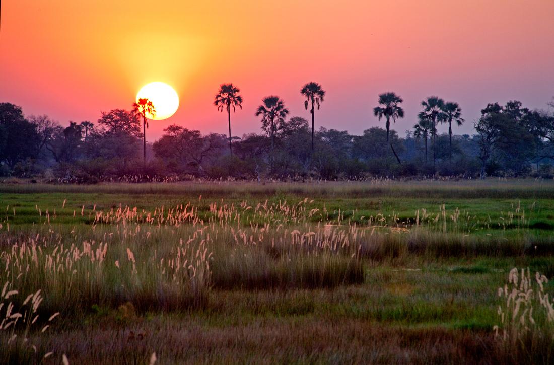 African Twilight - Okavango, Botswana